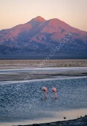 Volcano and flamingoes