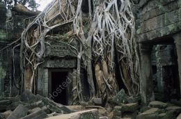 Jungle temple, Angkor