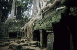 Jungle Temple again - Angkor, Cambodia