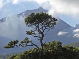 Pico's volcano, Azores