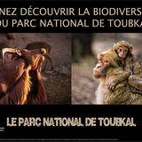Toubkal National Park Poster Fauna