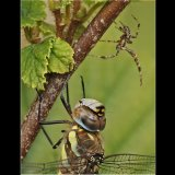 Sp[der and Migrant Hawker Face Off