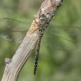 Female Migrant Hawker 2