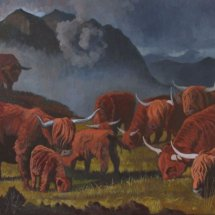 Highland cattle private commission