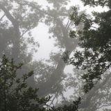 Trees in the Mist morning, Glen Etive