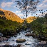 Tree and Stream Glen Nevis Autumn 2