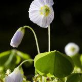Wildflowers in the Dark Mile