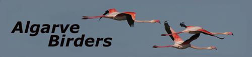 Algarve Birders