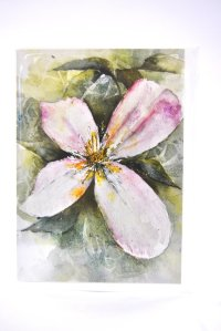 Clematis greetings card