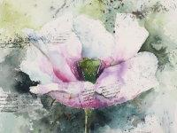 Pimperne Poppy