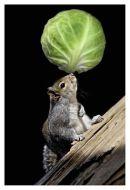 Balancing Sprout