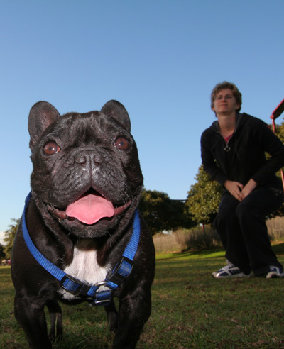 French Bull Dog and Proud Owner