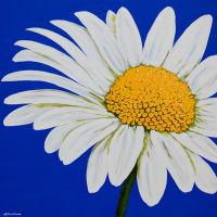 'Daisy White' SOLD