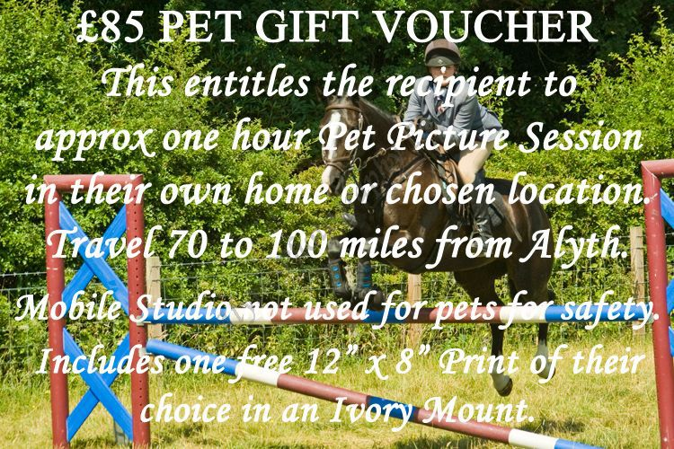 £85-Pet-Voucher