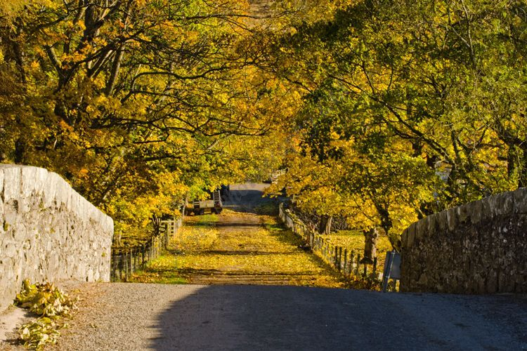 AANWN 4637 Autumn at Brewlands Glenisla