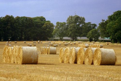 AAPWL 3488X Harvest Bales