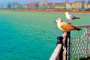 2 Seagulls looking out to sea
