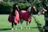 horse in red coats