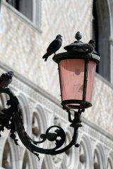 pigeons on pink lamp
