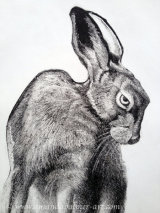 'March Hare' Detail
