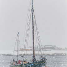 The Swan in snowstorm