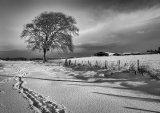 Footsteps In The Snow : Lynn Kerr : Score 12