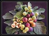 Com Helen Holmes : Figs