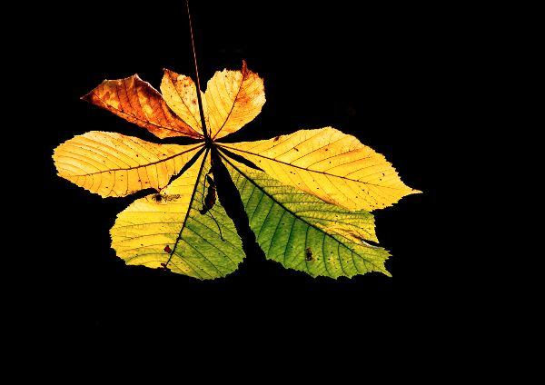 Autumn Leaf : Lynn Kerr