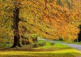 1st Autumn In Hulne Park : Lynn Kerr