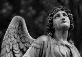 1st Angel : David Jones