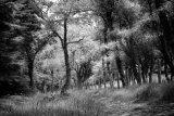 1st Graeme Pattison : Woodland Walk