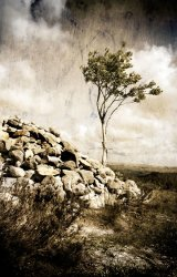 1st Harbottle Tree : Graeme Pattison