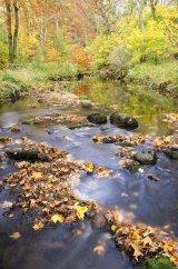 2nd River Wansbeck : Richard Poyer