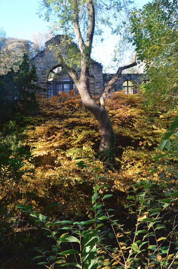 Shades of Autumn : Ray Horrocks