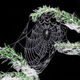 3rd Web : Richard Poyer