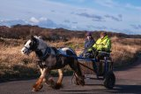 HC Gypsy's Horse & Cart : Helen Holmes