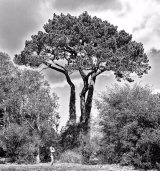 HC Ray McKenna : Three Footed Pine