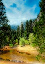 Aspens in Yosemite