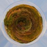HC Planet Autumn : Penny Horseman
