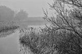 2nd Ladyburn Fog : David Burn
