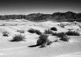 Mesquite Dunes Death Valley