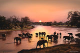 Elephant Crossing, Samburu, Kenya