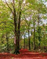 32 Autumn Trees