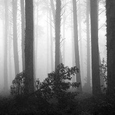 Misty Morning Webbers Post II