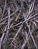 Forestry debris, Longridge