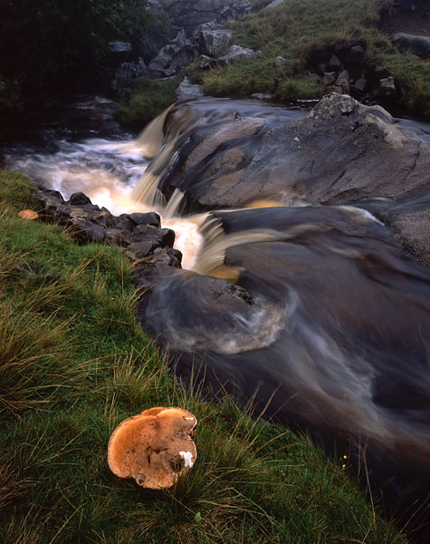 Fungi and stream