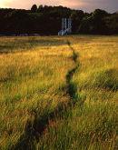 Meadow, Dinckley Bridge