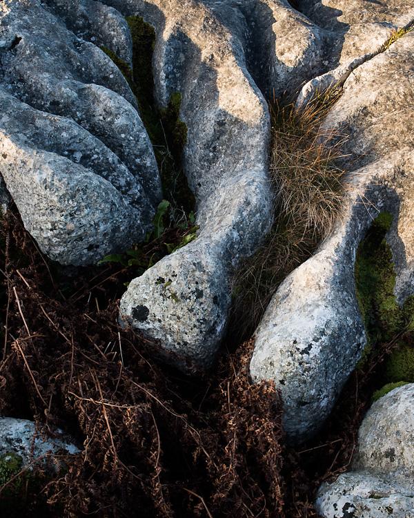 Limestone Detail, Gauber Rocks