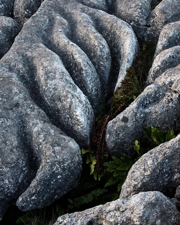 Limestone Detail 02, Gauber Rocks