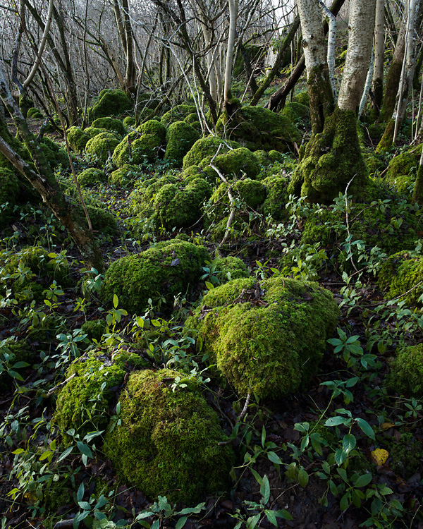 Park Wood, Hutton Roof Crags